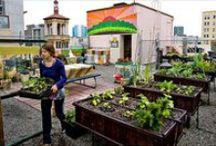 Urban Farming / by Matt Polinchak