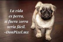 Ladridos / Aquí encontrarás las mejores frases de Don Pixel #Chistes #FrasesCélebres #ChistesCortos #Memes