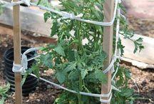 Tuinideeën voor onze tuin / Leuke ideeën voor onze eigen tuin achterin.