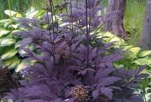 For the Garden / Gardening ideas