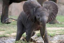 Elephants! / Because I love elephants!