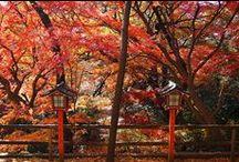 Setagaya's picture / 世田谷といえばで掲載した世田谷の写真です。足を運んでいただくきっかけになれば幸いです。