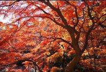 Setagaya's autumn