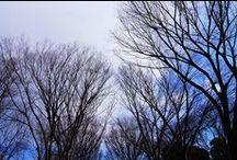 Setagaya's winter