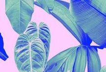 [ prints & patterns ]