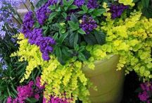 Container Combinations / Gardening