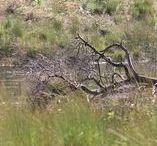 Landschap , tuinen en dieren / Wandelen in de natuur, mooie landschappen, dieren en nog meer....