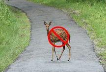 Deer Warning Systems / nothing-runs-like-deer-front-cars-deer-warning-systems