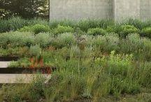 r u s t i c / Great examples of informal, rustic gardens / by Paul Heidrick