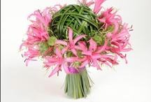 Flowers: Buketter