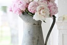Shabby & Romantic / by Marie-Chat