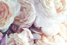 Blomster // Flowers