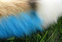 Fur Tutorials / Tips and tricks on using fur