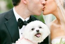 They Called It Puppy Love / To all the pet lover couples out there - this board is for you! From dogs and cats to horses and birds, here's how to incorporate your pets into your wedding.