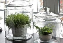 Herb Garden / Ideas for convenient, accessible, fresh herbs / by Lavende and Lemonade