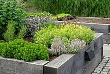 Above the Line - Raised bed gardening / Raised bed garden inspiration / by Lavende and Lemonade