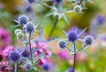 Flora * Natura * Природа * Nature