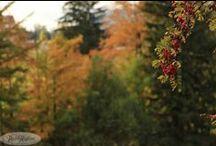 Tatry jesienią - Tatras in Autumn