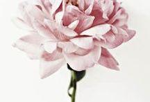 The Wild of Silence / Wild rose, dream garden.