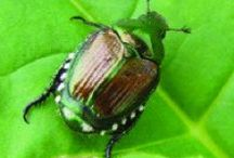 Insects, Weeds & Pests / All about insects, weeds and pests and how to control them!