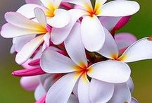 flowers /