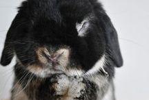 Likes - Lovely animals