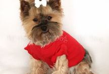 Summer Dog Clothes / Find cute and classy clothes for you dog.