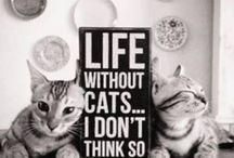 Kociaki Słodziaki :3 / Awww... Koty! :3