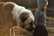 Elena Shumilova / Russisk fotograf Spesialitet barn og dyr