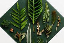 Botanisch interior / botanisch interior living