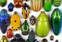 Gem Beetles / Beautiful bugs