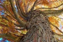 Philosophical trees