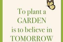 Healing plants / Passion & profession