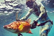 Spearfishing / What's the point in Freediving if You Are Not Spearing???