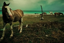 the horse / ...una tarde cualquiera de eterna primavera en el trópico terrestre    it's a cloudy dream...