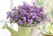 arreglos florales / by Dgmila