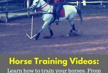 Horse Training Tips / Looking for the best Horse Training Tips, Lessons and Videos? Then this is the library to look through. From basic groundwork, right through to advanced riding.