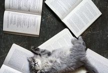 ✼ cats and books ✼ / // my two favorite things //