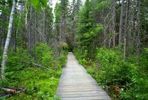 Algonquin Park Trails / Popular trails in Algonquin Park along highway 60
