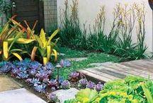 Home : Garden Ideas / Fruit trees, succulents & cacti