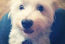 Sophie / Doggie stuff / by Diana Culp
