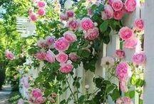 Tuininspiratie Romantiek / In de romantische tuin draait het om verfijning, zachte pasteltinten en details. Vloeiende overgangen en fragiele planten dragen bij aan een serene sfeer.