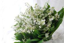 スズラン Lily of the valley / スズランのブーケと装花