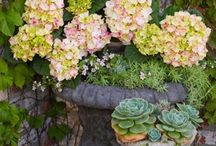 SUCCULENTS / To conserve water and enjoy the unique nature of these amazing plants