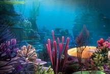 Underwater World / Hier findet ihr Bilder aus der bunten Unterwasserwelt -dem aufregendem Lebensraum der Wale. / The living space of the whales is the beautiful and unbelievingly many-sided world of the ocean: The underwater world.