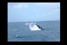 Whale Whisperer Project