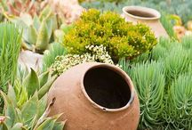 Gardens - pots