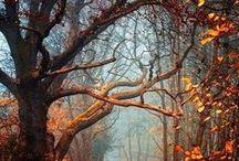 # Autumn Awesomeness