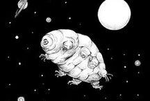 Water bears (Tardigrades)