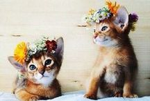 + Cuteness / Cats, dogs, puppies, kittens, and more